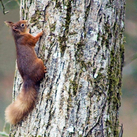 RedSquirrelMarkHunt