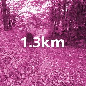 Ashford-Woodland-Loop-Pink